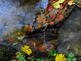 Strumień wodny wijący się wśród drzew w parku