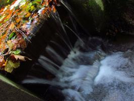 Spad wodny w parku