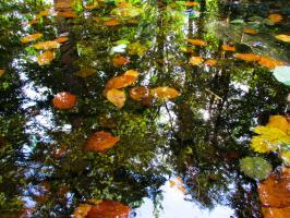 Zbiornik wodny w Parku Zdrojowym