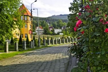 Kwitnące miejskie róże