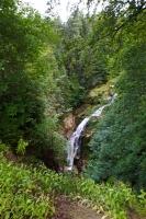 Rośliny leśne oplatające wodospad Kamieńczyka