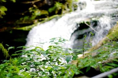 Rośliny przy wodospadzie Szklarki