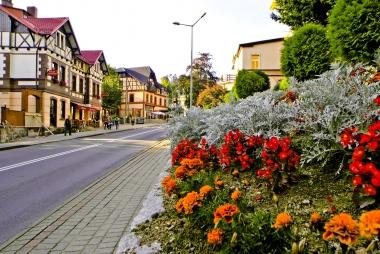 Kwiaty przy drodze