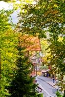 Drzewa w Szklarskiej