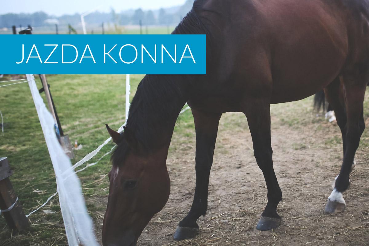Jazda konna w Gdańsku i okolicy