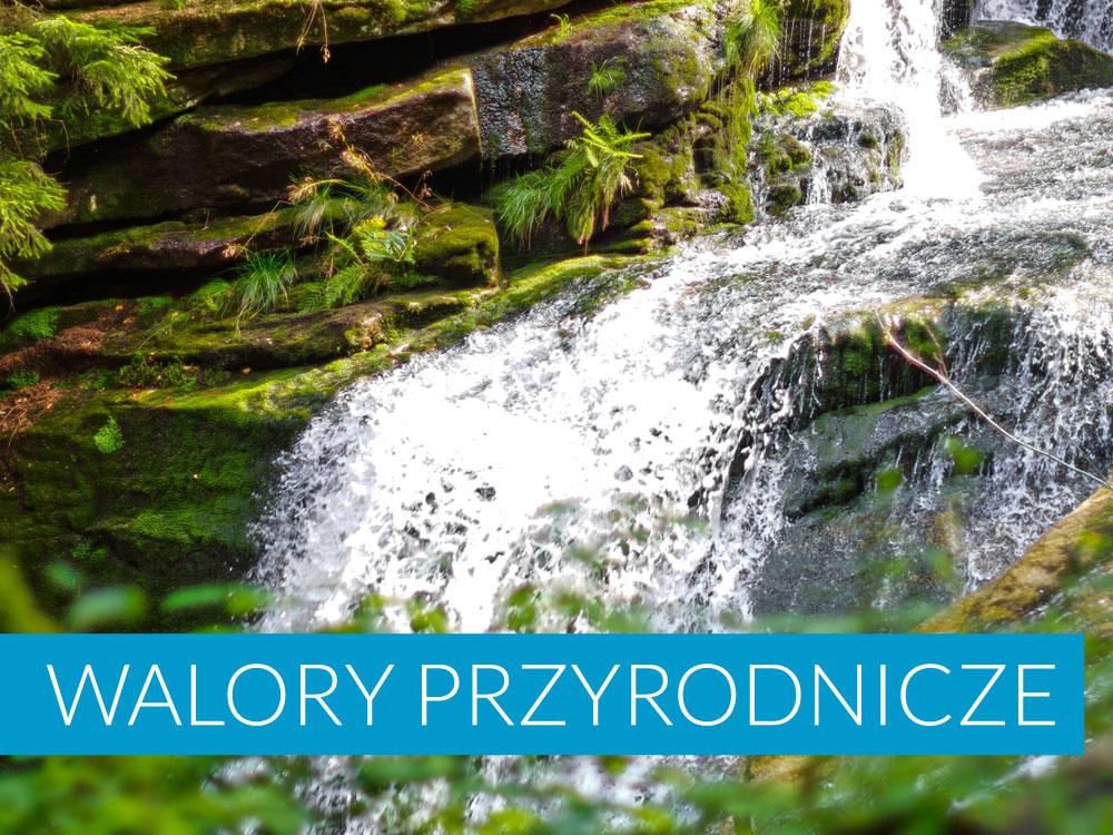 Walory przyrodnicze Bukowina Tatrzańska i okolica