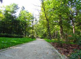 Ścieżka w parku