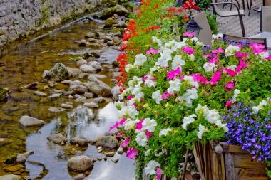 Kwiaty nad potokiem Kamieńczyk