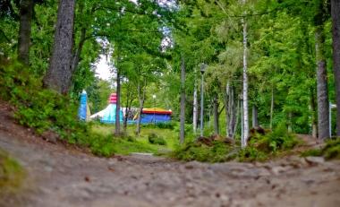 Pomiędzy drzewami parku