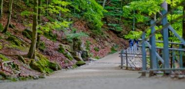 Scieżka przyrodnicza wzdłuż potoku Szklarka